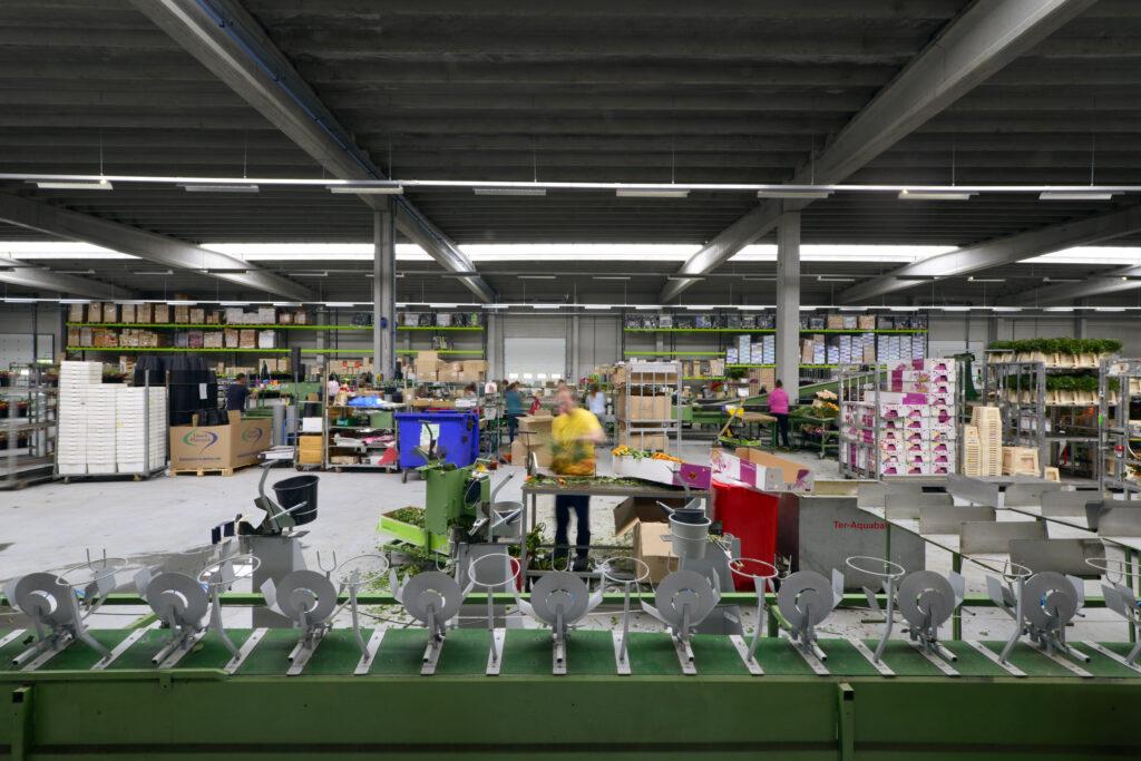 Nieuwbouw Celieplant/Bouquetnet - bedrijfshal