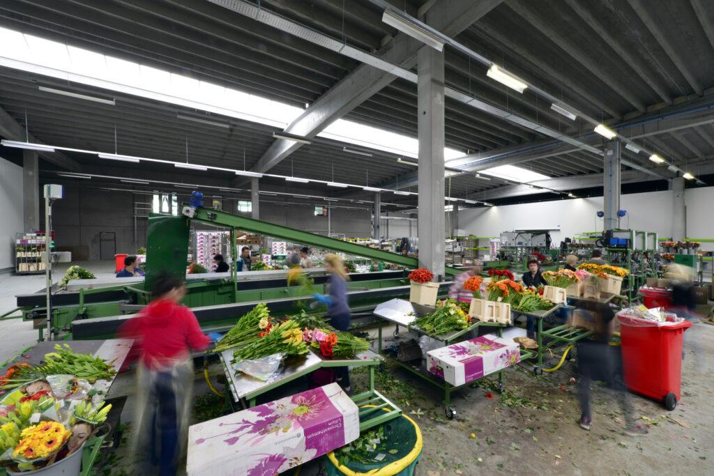 Bedrijfshal voor Celieplant / Bouquetnet door Hercuton b.v. uit Nieuwkuijk
