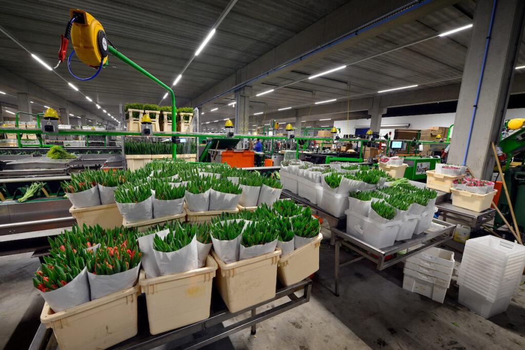 Hercuton heeft het 2-laags distributiecentrum voor L&M Rijnsburg turnkey opgeleverd.